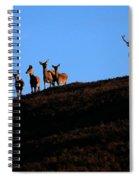 Red Deer Group Spiral Notebook