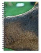 Red Doberman Champion  Spiral Notebook