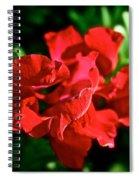 Red Dragon Spiral Notebook