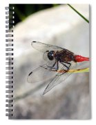 Red Dragonfly 2 Spiral Notebook