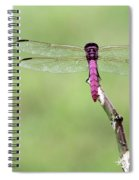 Red Dragonfly Dancer Spiral Notebook