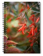 Red Exotic Spiral Notebook