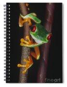 Red-eyed Tree Frog Agalychnis Callidryas Spiral Notebook
