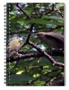Red-eyed Vireo Feeding Cowbird Fledgling Spiral Notebook