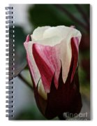 Red Foliated White Spiral Notebook