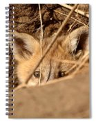 Red Fox Pup Peaking Out Of Den Spiral Notebook