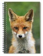 Red Fox Vulpes Vulpes, Hoge Veluwe Spiral Notebook
