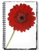 Red Gerber Daisy Spiral Notebook