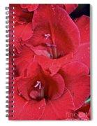 Red Gladiolus Spiral Notebook