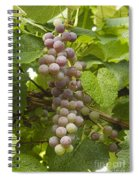 Red Grapes On The Vine Spiral Notebook