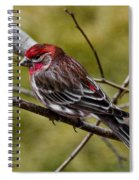 Red Head Black Tail Spiral Notebook