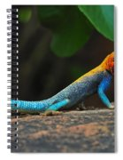 Red-headed Agama Spiral Notebook