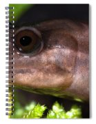 Red Hills Salamander Spiral Notebook