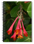 Red Honeysuckle Blossoms 1 Spiral Notebook