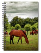 Red Horses Spiral Notebook