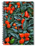 Red Hots Spiral Notebook