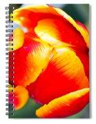 Red In A Tulip Spiral Notebook