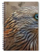 Red Kite - Featured In The Groups - Spectacular Artworks And Wildlife Spiral Notebook