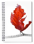Red Leaf Of Autumn On White Spiral Notebook