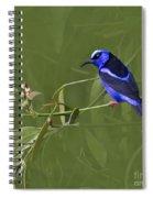 Red-legged Honeycreeper - Cyanerpes Cyaneus Spiral Notebook