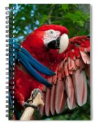 Red Macaw Spiral Notebook
