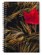 Red Maple Leaf On Pine Needles In Pool Spiral Notebook