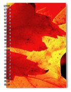 Red On Gold Spiral Notebook