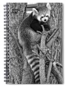 Red Panda 2 Monochrome Spiral Notebook