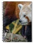 Red Panda Exploration Spiral Notebook