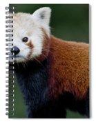 Red Panda Spiral Notebook