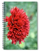 Red Plume Spiral Notebook
