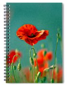 Red Poppy Flowers 06 Spiral Notebook