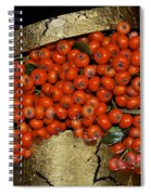 Red Pyracantha Berries Spiral Notebook
