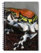 Red Rain Frog Spiral Notebook