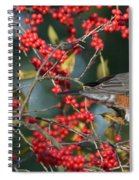 Red Robin Spiral Notebook
