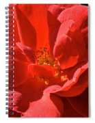 Red Rose Summer Spiral Notebook