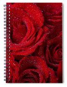 Red Roses And Water Drops Spiral Notebook
