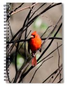 Red Royalty Spiral Notebook