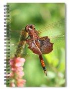 Red Saddlebag Dragonfly In The Marsh Spiral Notebook