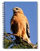Pismo Beach Red Shoulder Hawk Spiral Notebook