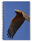 Red-shouldered Hawk - Apache Spiral Notebook
