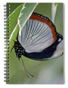Red Spot Diadem Butterfly Spiral Notebook