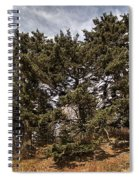 Red Spruce On Whitetop Mountain Spiral Notebook