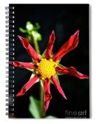 Red Star Dahlia Spiral Notebook