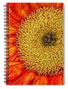 Red Sunflower Iv Spiral Notebook