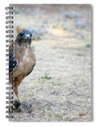 Red Tailed Hawk Catch Spiral Notebook