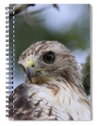 Red-tailed Hawk Has Superior Vision Spiral Notebook