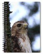 Red-tailed Hawk - Hawkeye Spiral Notebook
