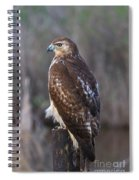 Red-tailed Hawk Spiral Notebook