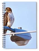 Red-tailed Hawk Perched Spiral Notebook